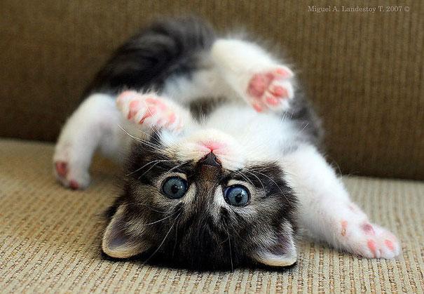 gatito uy tierno