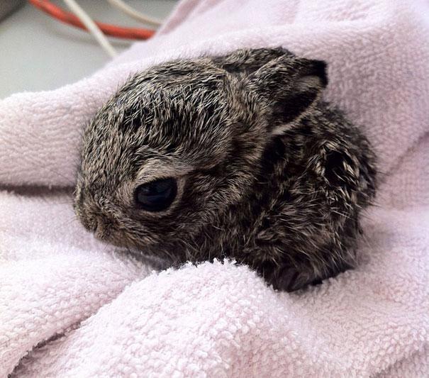 bebe conejo muy tierno